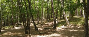 みずがき山森の農園キャンプ場