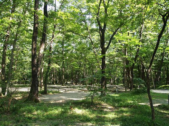 こっこランド那須林間サイト2